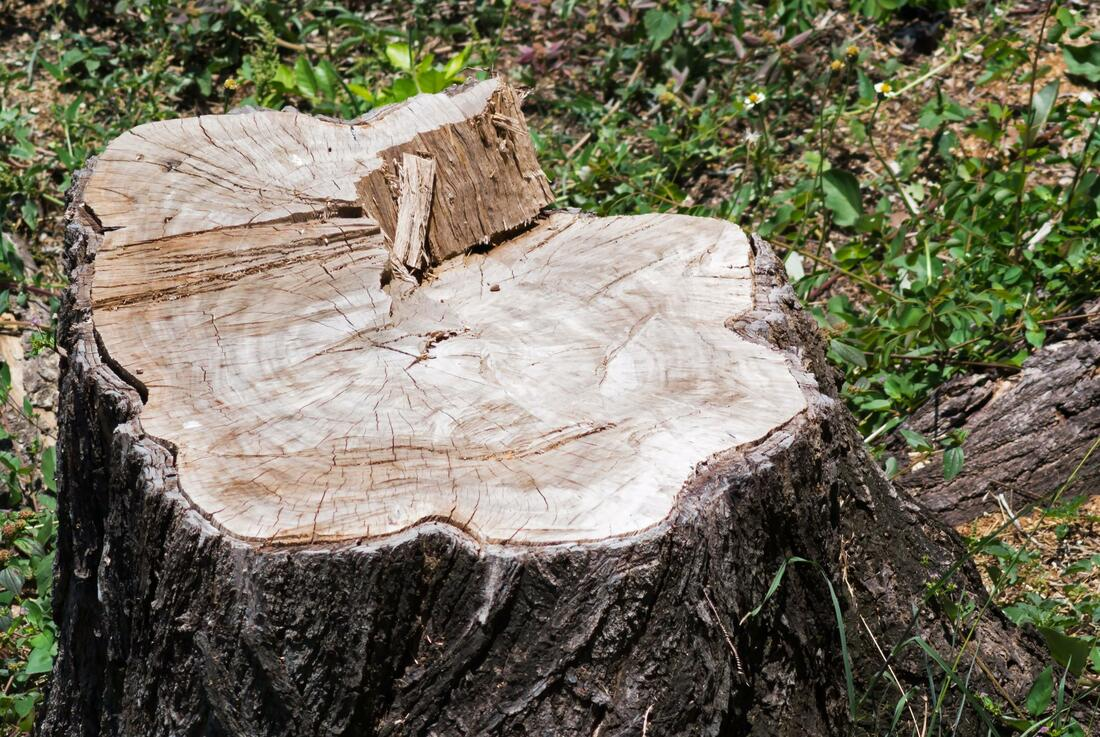 ​Stump Removal and Grinding Notts